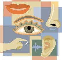 Your Sensory Organs